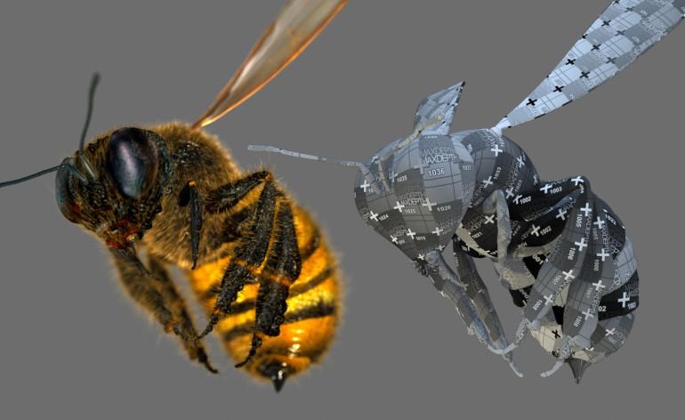 Bee_UV
